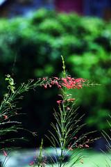 Pamplemousse Botanical Garden 16