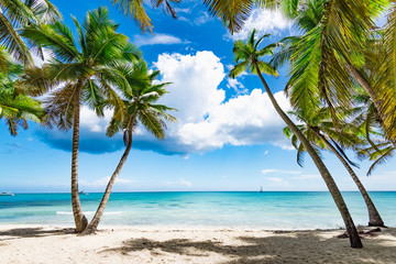 paradise tropical beach palm