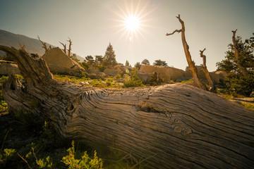 Fototapete - Alpine habitat