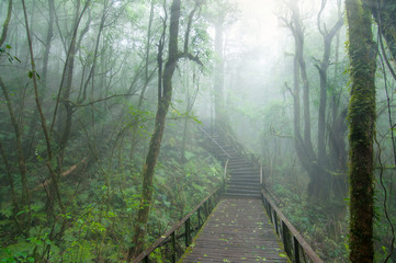 Wooden walkway in deep forest with sunrise.