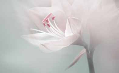 single dreamy surreal white flower