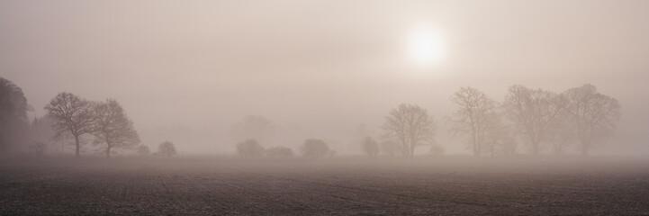Sun rising through fog above a row of trees. Norfolk, UK.