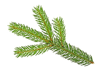 Pine tree branch isolated on a white background