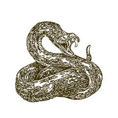 Shot snake. Vector illustration.