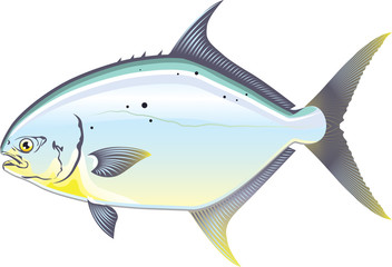 Pompano Florida fish vector illustration