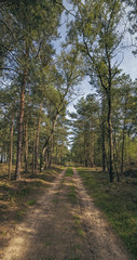 Country road in forest on sunny day. Panorama shot.