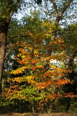 Maple tree with red, yellow, orange, and green fall color at Necedah National Wildlife Refuge in Wisconsin