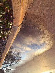 Sky & Tree Reflection in Puddle