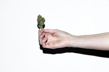 Handheld Cannabis Bud Snapshot