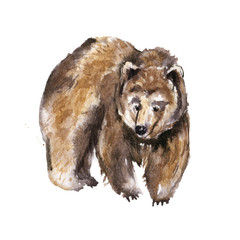 Big brown bear isolated on white background, Watercolor animal illustration
