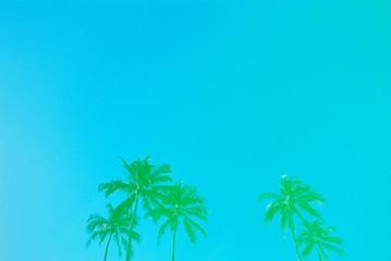 aqua palm trees
