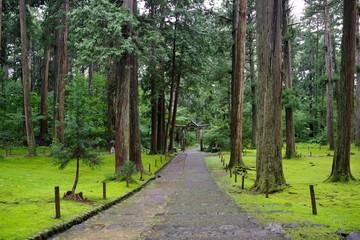 苔が美しい日本の神社