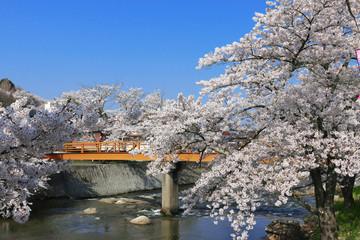 大滝根河畔の桜並木(福島県・田村市)