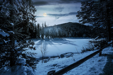spruce forest on winter night in full moon light. lovely nature scenery in mountains