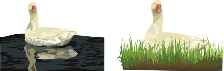 Гусь плывет гусь сидит в траве