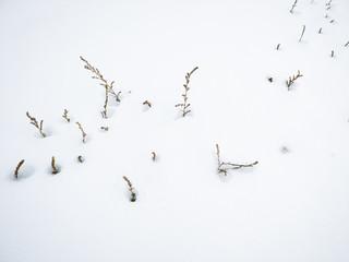 Snowfield and Footprint