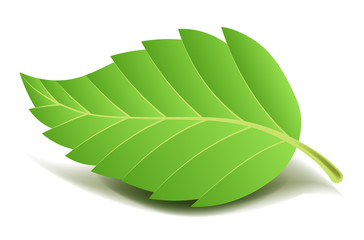Green tree leaf on small stem with ribbed edge
