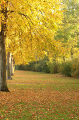 Herbst, Laubbäume verlieren ihre Blätter
