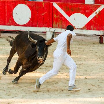 raseteur et taureau dans les arènes