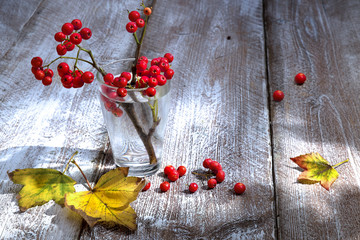 Still life autumn branch rowanberry glass water yellow leaves wooden table bright sunlight mood beautiful art decorative picture