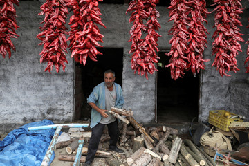 A man collects fire woods as bunches of peppers hang on the wall of his house to dry in the village of Donja Lakosnica