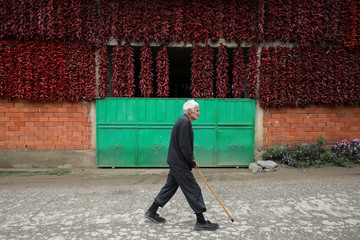 A man walks along a street as bunches of peppers hang on the wall of a house to dry in the village of Donja Lakosnica