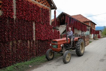 A man rides on a tractor past bunches of peppers hanging on walls of houses to dry in the village of Donja Lakosnica