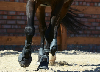 Legs of a sports horse. Equestrian sport in details