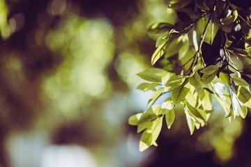 緑のボケ 植物