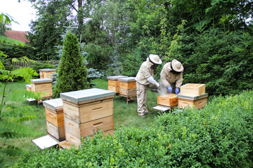 Beekeeper at work on his apiary with smoker next to the beehive