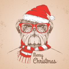 Christmas Hipster fashion animal bulldog dressed  a New Year hat and scarf