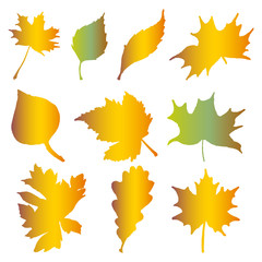 Autumn leaves, on a white background.