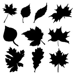 Silhouette of autumn leaves on a white background.