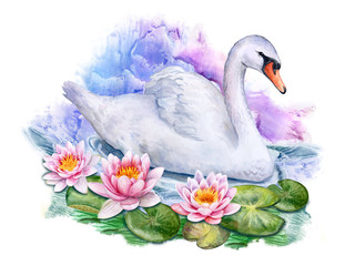 Lotus. Water lilies and white swan. Watercolor. Illustration