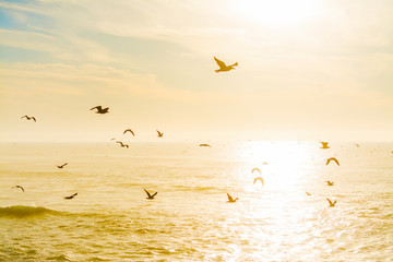 Seagulls flying over the sea at dusk