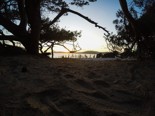 Pine trees on the sand in Alghero shore at sunset