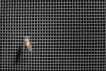 Fly on mosquito net against dark background