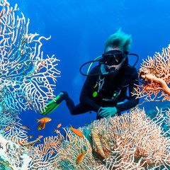SCUBA diver near a large fan coral on a tropical reef