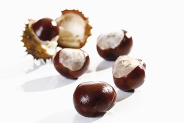 Horse Chestnuts (Aesculus)