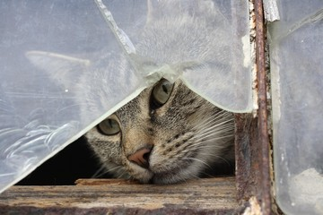 Cat behind a broken pane of glass