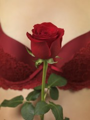 Woman in lingerie holding a red rose in front of her chest