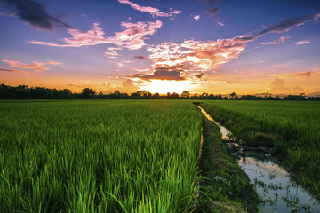Lanscape rice field in Thailand at sunset