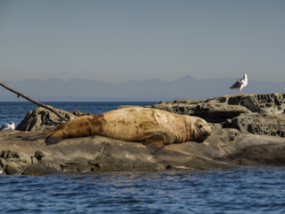 Going Flat Out