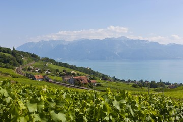 View of Lutry, Lavaux-Oron district, Lake Geneva, canton of Vaud, Switzerland, Europe