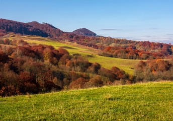 grassy meadow in mountainous countryside. beautiful landscape with forest on hillside in warm late autumn day