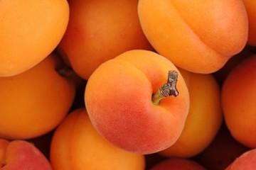 Apricots (Prunus armeniaca)