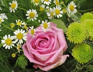 Bouquet with Gerberas (Gerbera), Roses (Rosa), and Oxeye Daisies (Leucanthemum vulgare)