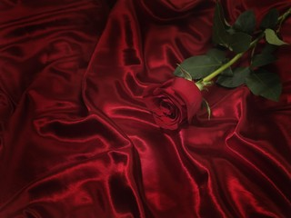 Single red rose on shiny silky fabric