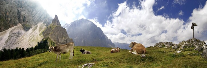 Panoramic view of happy cows at the Piz Ciaulong peak with summit cross on the Langkofel massif, Val Gardena, province of Bolzano-Bozen, Italy, Europe