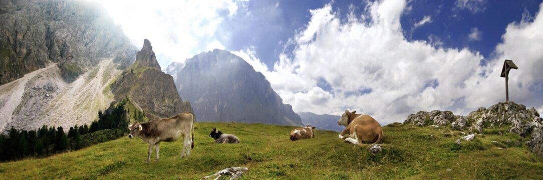 Panoramic view of happy cows at the Piz Ciaulong peak with summit cross on the Langkofel massif, Val Gardena, province of Bolzano-Bozen, Italy, Europe